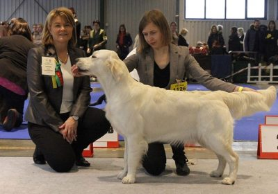 International Dog Show in Vilnius