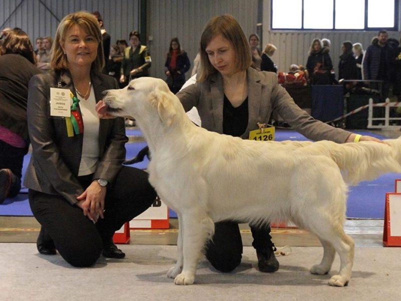 International Dog Show in Vilnius