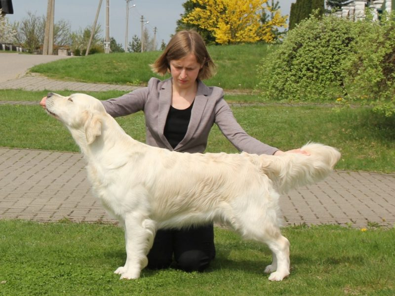 International Dog Show in Sopot