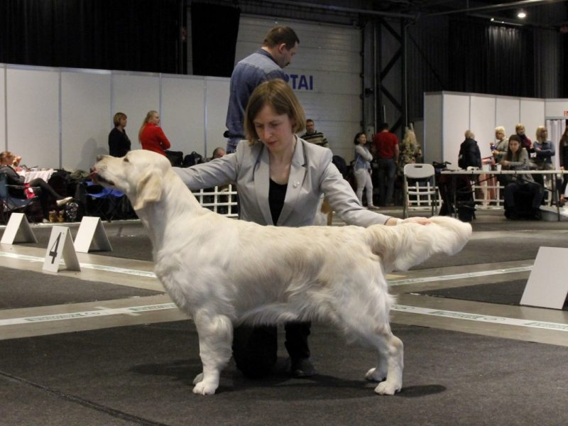 The Three Days International Dog Shows marathon in Vilnius