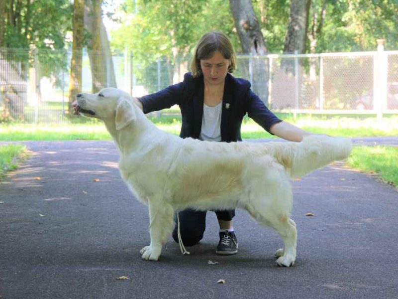 Dog Shows in Tartu, 2020 August